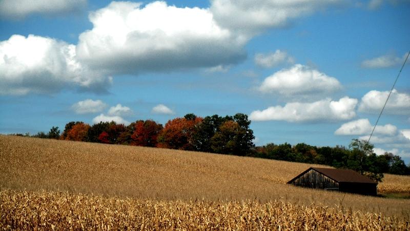 fall scene1