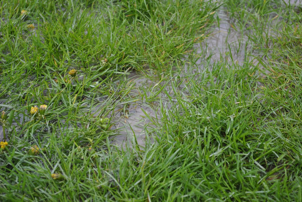Lawn & Garden Feature: Getting Rid of Standing Water in Your Yard