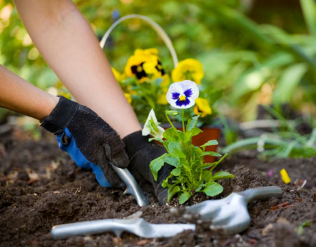 garden housekeeping