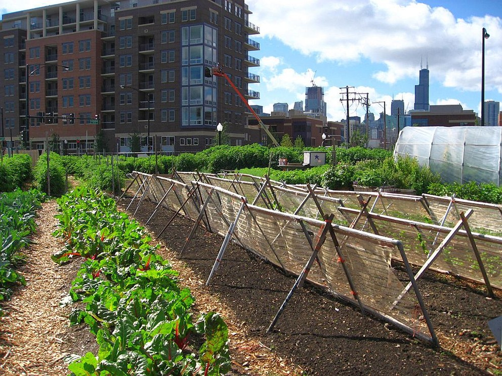 Chicago_urban_farm (Linda N.-Wikimedia Commons)