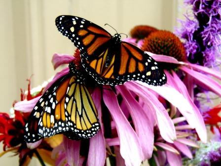 Butterfly Remembrance Release Being Held June 29