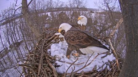 Eagles Nest York Pa >> Now Showing: Nesting PA Bald Eagles | GantNews.com