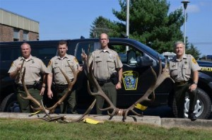 Left, to right, WCOs Dan Murray, Dave Stewart and Mark Gritzer, and Northcentral Region Law Enforcement Supervisor Rick Macklem pose with the antlers seized in the poaching investigation that has led to charges against three Centre County men. The 10- by 9-point rack at right initially was measured at 432 7/8 inches, based on standards set forth by the Boone & Crockett big-game scoring program. Only two bulls legally harvested in Pennsylvania have scored higher. The rack from the 5-by-7 bull is at left, and the sawed-off antlers from the 4-by-5 can be seen in front of it. (Provided photo)