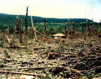 Image result for moshannon state forest tornado