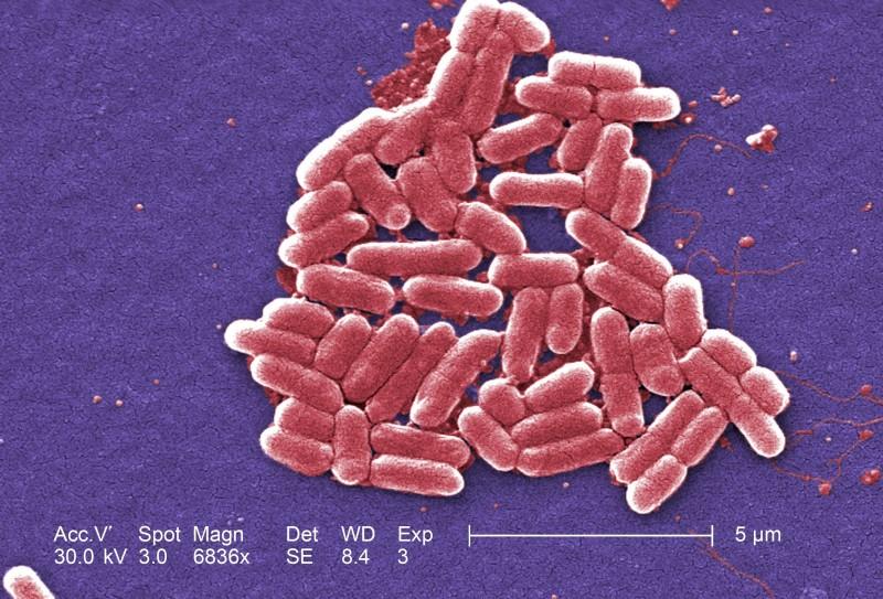 E. Coli Outbreaks Fast Facts