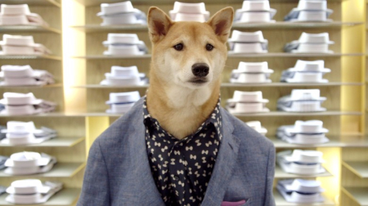 Dog offers men fashion advice