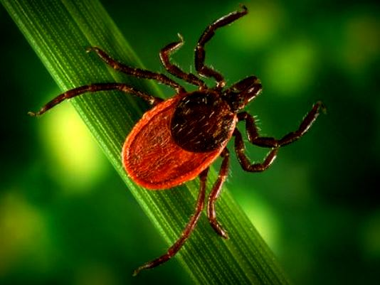 Dept. of Health Calls for Increased Awareness to Strengthen Lyme Disease Detection