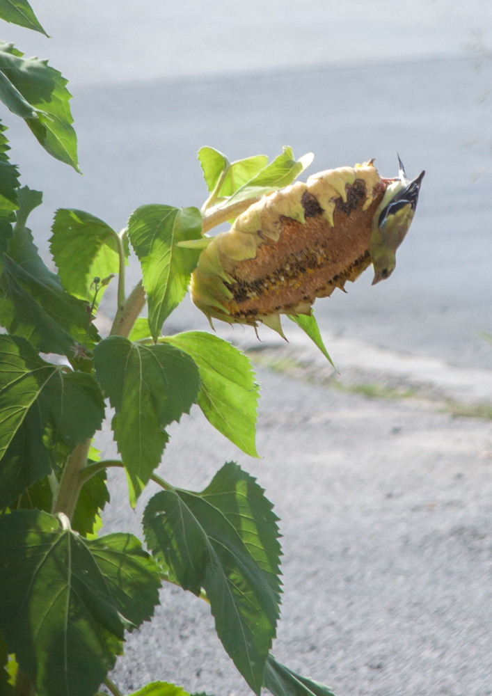 PHOTOS: Summertime in Clearfield County