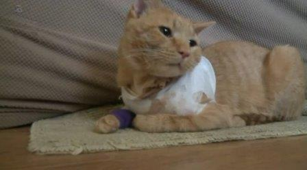 'He's my Son's Little Hero,' Cat Takes a Bullet and Saves 3-year-old in York