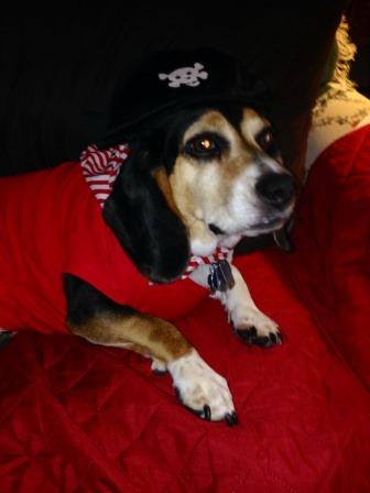 Fall Festival to Feature Howl–O-Ween Pet Parade