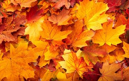 Clearfield Borough Announces Schedule for Curbside Leaf Collection