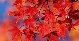 Grampian Fall Festival Slated for Oct. 17