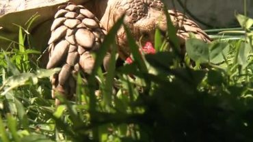 Police: Two men, teen blow up turtle with firecrackers in Lancaster County