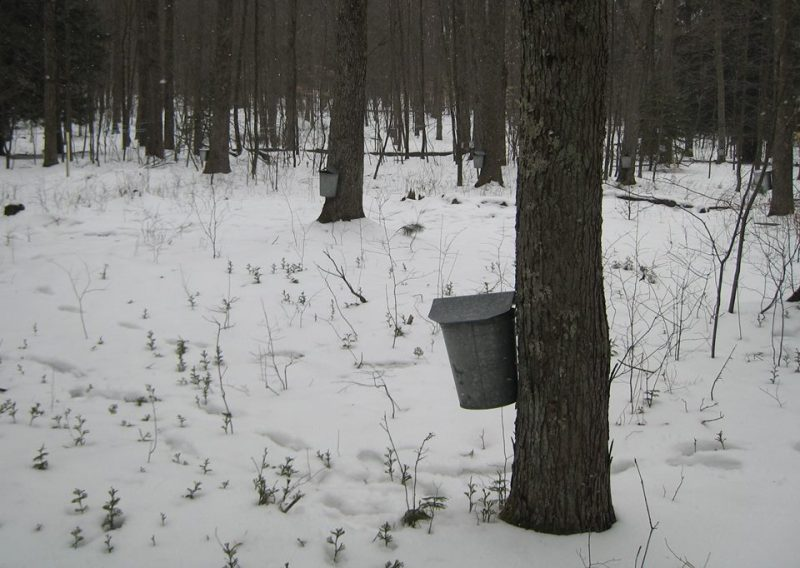 Maple Sugaring Programs Return to Parker Dam in March