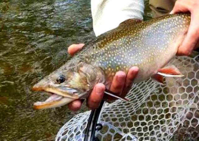 Enter Your Catch in the Big Fish Contest