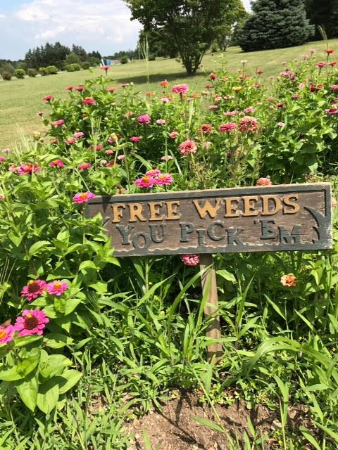 READER PHOTO: When Weeds Get Ahead of Your Flowers …