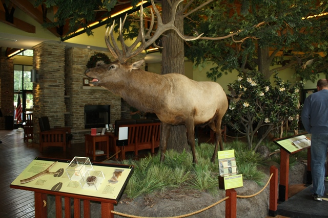 Penn State DuBois Alumni to Host 'A Night in the Wilds'