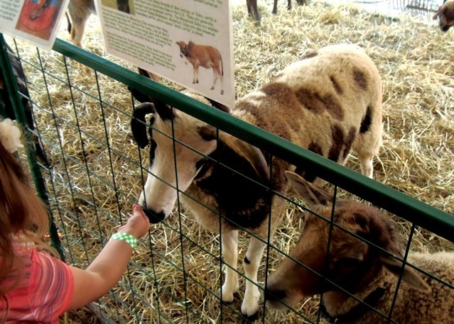 PHOTO SLIDESHOW: Scenes from around the Clearfield County Fair