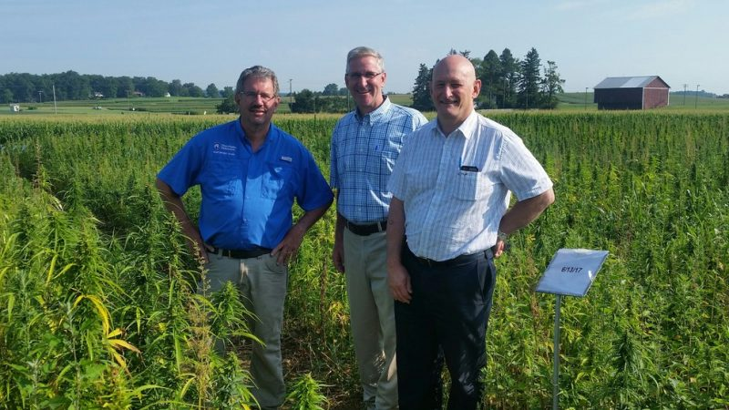 Penn State Pilot Program for Hemp Research is Yielding Production Insights