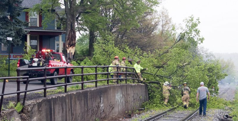 Tree Falls in Clearfield Borough