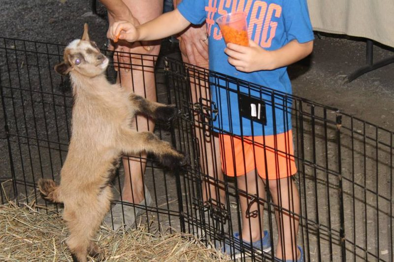 PHOTOS: Scenes from Around the Clearfield County Fair