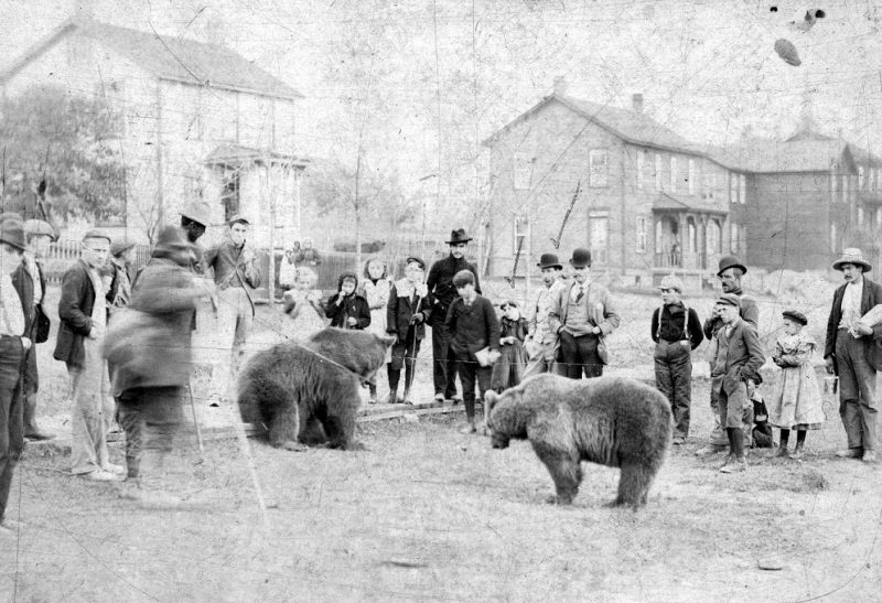 Throwback Thursday: The Wallaceton Bear Show