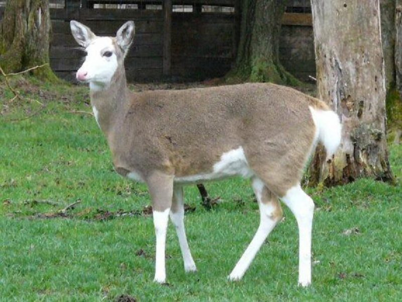 Pebbles Celebrates 20th Birthday at Double Diamond Deer Ranch