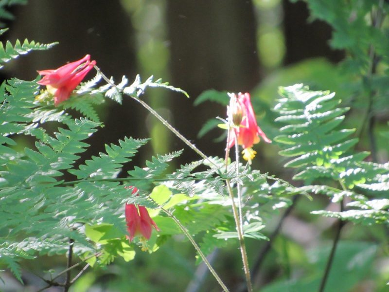 Wonders of the Wilds: Aphrodite's Gift to the Pennsylvania Wilds