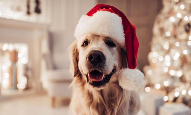 4 Ways to Celebrate the Holidays with Your Dog