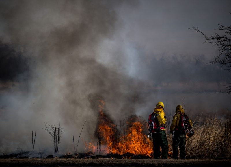 Penn State Extension Program to Help Private Forest Owners Use Prescribed Fire