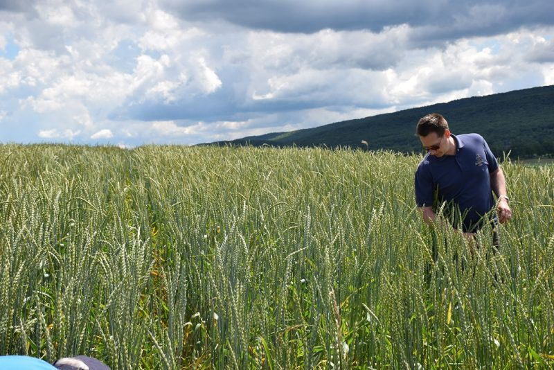 Penn State Extension to Hold Clearfield Crops Day