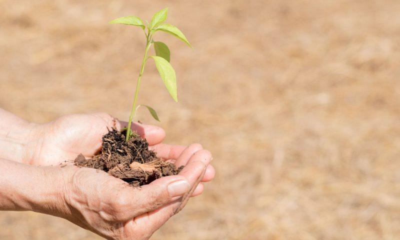 Ways Individuals and Municipalities Can Combat Droughts
