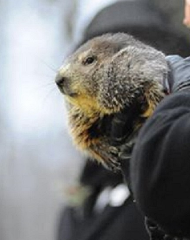 For the First Time in History, Punxsutawney Phil Predicts Second Consecutive Early Spring